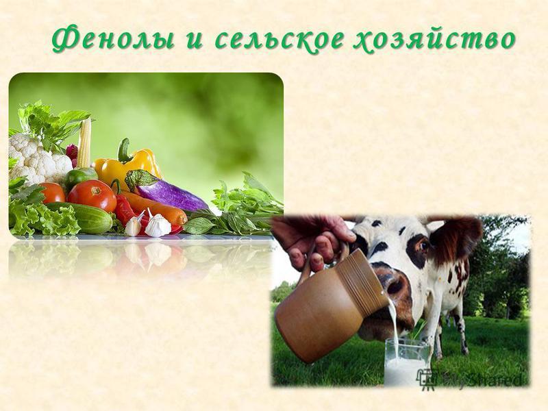 Фенолы и сельское хозяйство