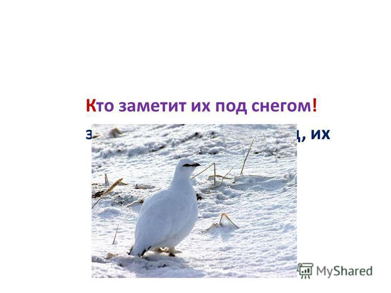 заметит, снегом, кто, под, их Кто заметит их под снегом!