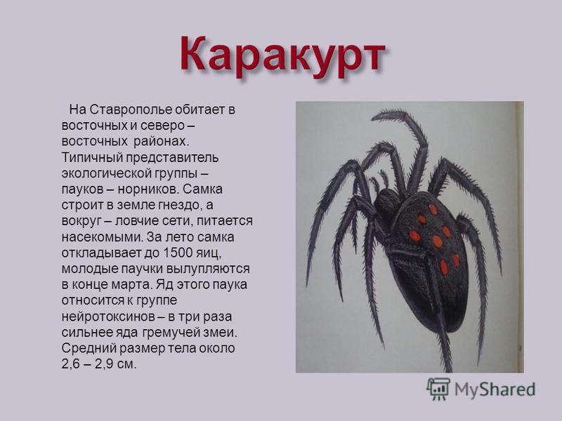 На Ставрополье обитает в восточных и северо – восточных районах. Типичный представитель экологической группы – пауков – горников. Самка строит в земле гнездо, а вокруг – ловчие сети, питается насекомыми. За лето самка откладывает до 1500 яиц, молодые