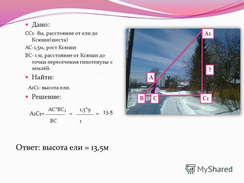 Дано: СС1- 8 м, расстояние от ели до Ксюши(шеста) АС-1,5 м, рост Ксюши ВС- 1 м, расстояние от Ксюши до точки пересечения гипотенузы с землёй. Найти: А1С1- высота ели. Решение: А1С1= ВСС1 А1 А ? АС*ВС 1,5*9 ВС 1 == 13,5 Ответ: высота ели = 13,5 м