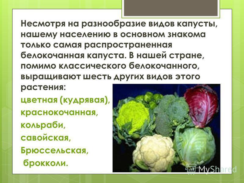 Несмотря на разнообразие видов капусты, нашему населению в основном знакома только самая распространенная белокочанная капуста. В нашей стране, помимо классического белокочанного, выращивают шесть других видов этого растения: цветная (кудрявая), крас