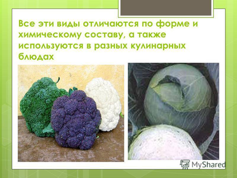 Все эти виды отличаются по форме и химическому составу, а также используются в разных кулинарных блюдах