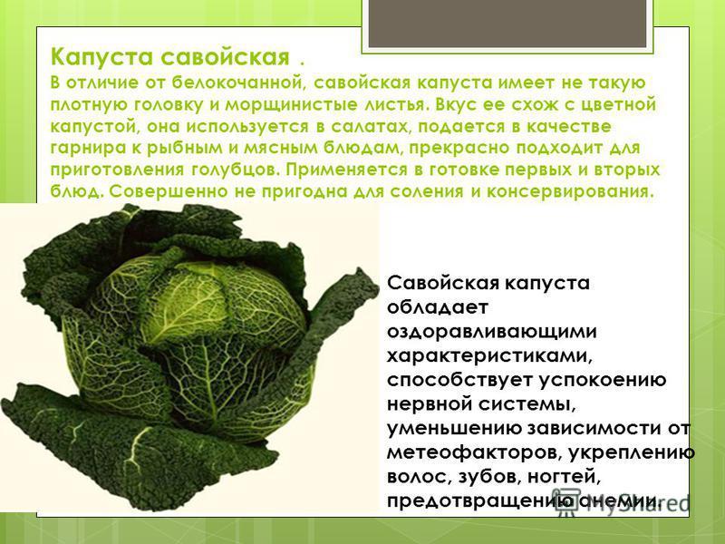 Капуста савойская. В отличие от белокочанной, савойская капуста имеет не такую плотную головку и морщинистые листья. Вкус ее схож с цветной капустой, она используется в салатах, подается в качестве гарнира к рыбным и мясным блюдам, прекрасно подходит