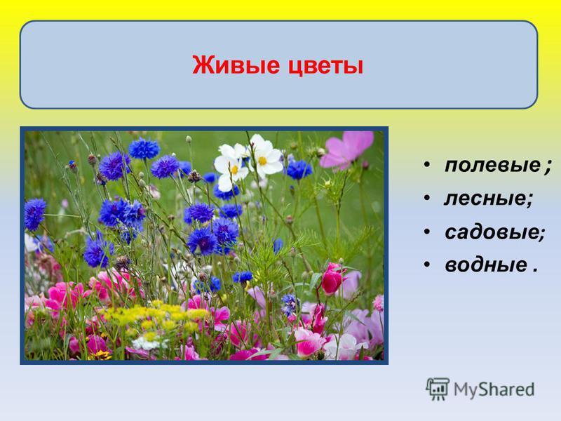 полевые ; лесные; садовые ; водные. Живые цветы