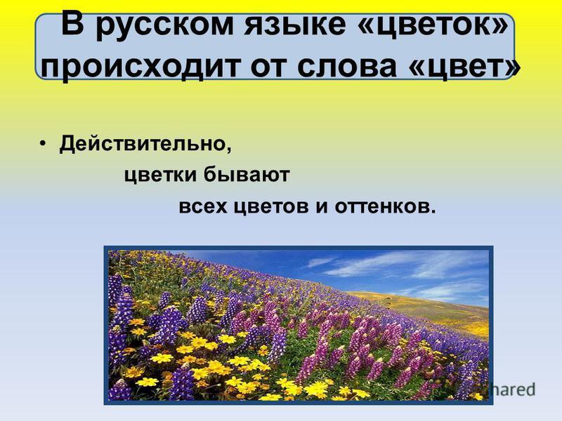 В русском языке «цветок» происходит от слова «цвет» Действительно, цветки бывают всех цветов и оттенков.