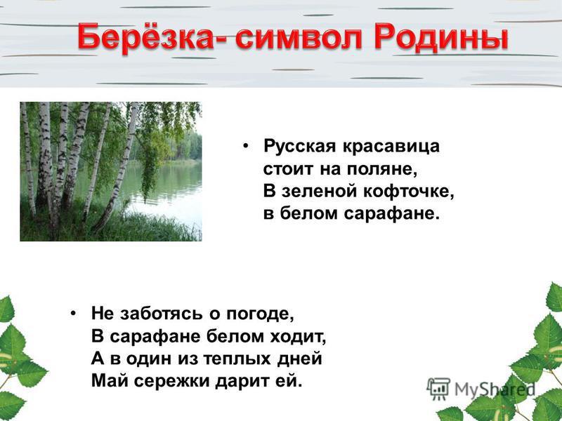 Русская красавица стоит на поляне, В зеленой кофточке, в белом сарафане. Не заботясь о погоде, В сарафане белом ходит, А в один из теплых дней Май сережки дарит ей.