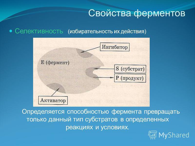Свойства ферментов Селективность (избирательность их действия) Определяется способностью фермента превращать только данный тип субстратов в определенных реакциях и условиях.