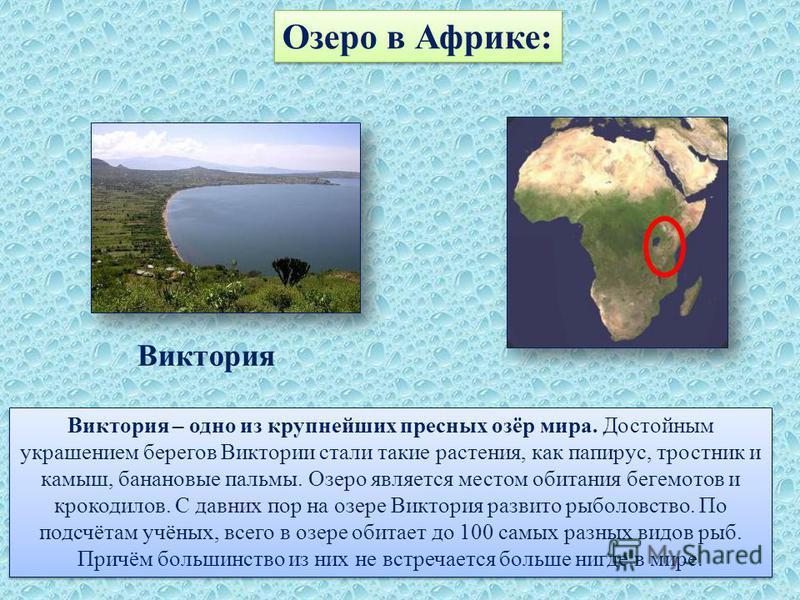 Озеро в Африке: Виктория – одно из крупнейших пресных озёр мира. Достойным украшением берегов Виктории стали такие растения, как папирус, тростник и камыш, банановые пальмы. Озеро является местом обитания бегемотов и крокодилов. С давних пор на озере