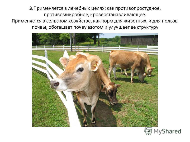 Распространен в европейской части России, Сибири, на Дальнем Востоке, на Кавказе, на Украине. Растет на заливных лугах, полянах, зарослях кустарников, на опушках леса.