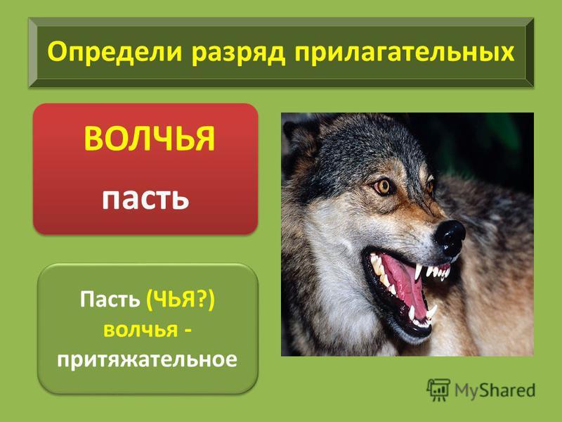 Определи разряд прилагательных ВОЛЧЬЯ пасть Пасть (ЧЬЯ?) волчья - притяжательное