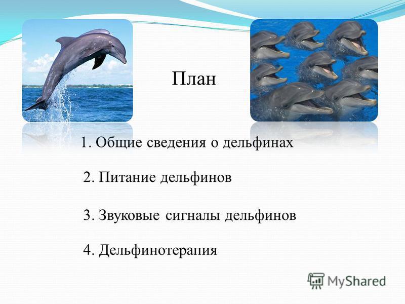 План 1. Общие сведения о дельфинах 2. Питание дельфинов 3. Звуковые сигналы дельфинов 4. Дельфинотерапия