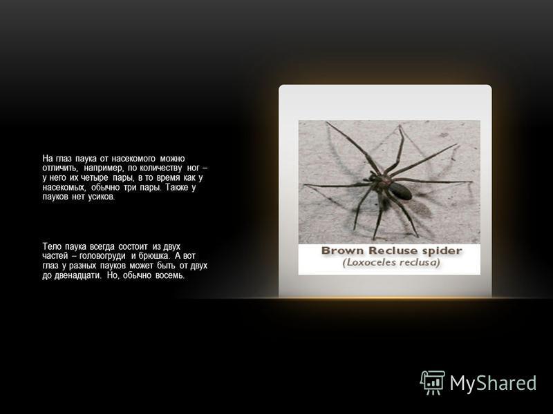 На глаз паука от насекомого можно отличить, например, по количеству ног – у него их четыре пары, в то время как у насекомых, обычно три пары. Также у пауков нет усиков. Тело паука всегда состоит из двух частей – головогруди и брюшка. А вот глаз у раз