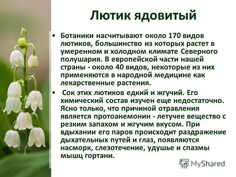 Ботаники насчитывают около 170 видов лютиков, большинство из которых растет в умеренном и холодном климате Северного полушария. В европейской части нашей страны - около 40 видов, некоторые из них применяются в народной медицине как лекарственные раст