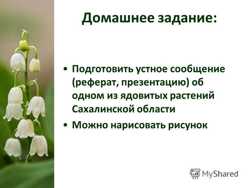 Домашнее задание: Подготовить устное сообщение (реферат, презентацию) об одном из ядовитых растений Сахалинской области Можно нарисовать рисунок