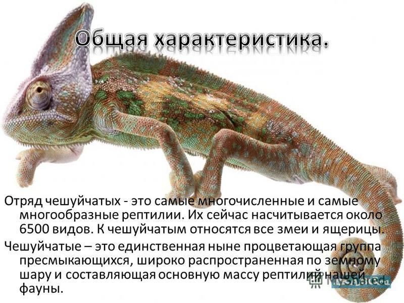 Даже самое уродливое и страшное животное – как и уродливый, страшный человек – не бывает совсем лишено каких-то пусть самых маленьких привлекательных черт. Дж. Даррелл