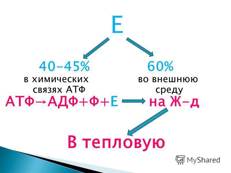 Е 40-45% 60% в химических во внешнюю связях АТФ среду АТФАДФ+Ф+Е на Ж-д В тепловую