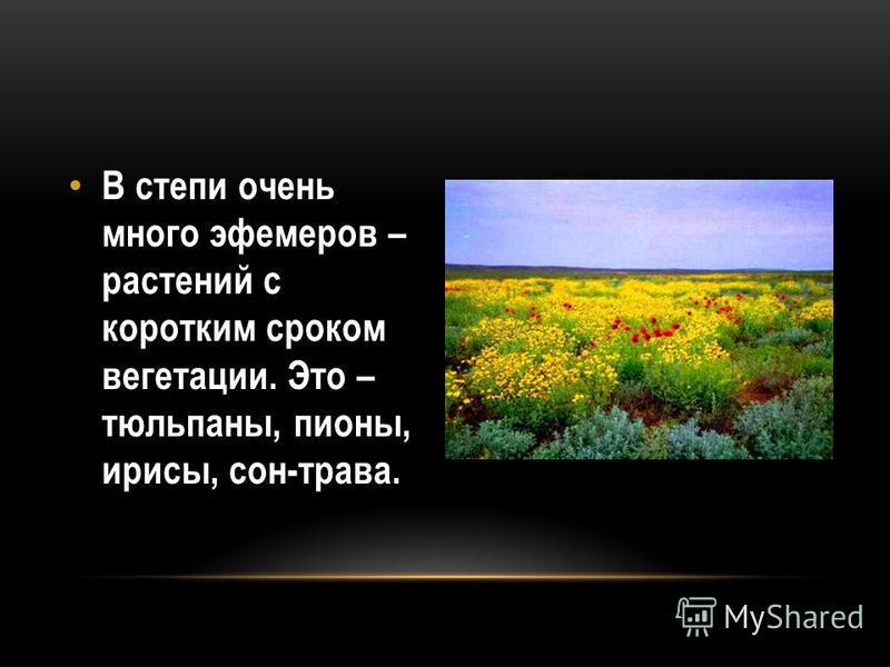 В степи очень много эфемеров – растений с коротким сроком вегетации. Это – тюльпаны, пионы, ирисы, сон-трава.