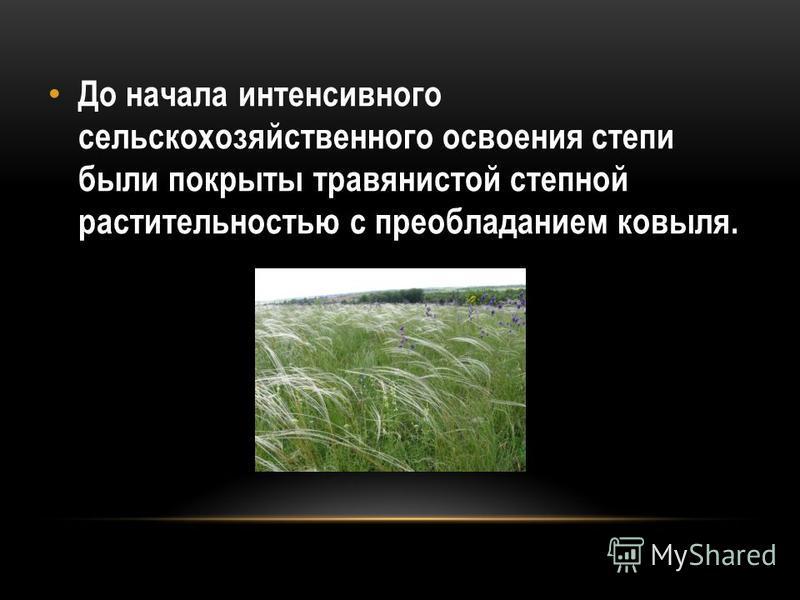 До начала интенсивного сельскохозяйственного освоения степи были покрыты травянистой степной растительностью с преобладанием ковыля.