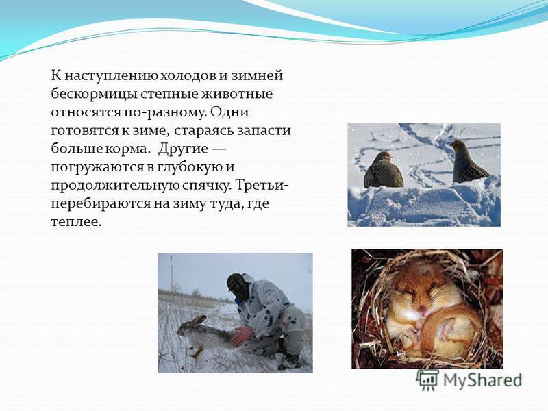К наступлению холодов и зимней бескормицы степные животные относятся по-разному. Одни готовятся к зиме, стараясь запасти больше корма. Другие погружаются в глубокую и продолжительную спячку. Третьи- перебираются на зиму туда, где теплее.
