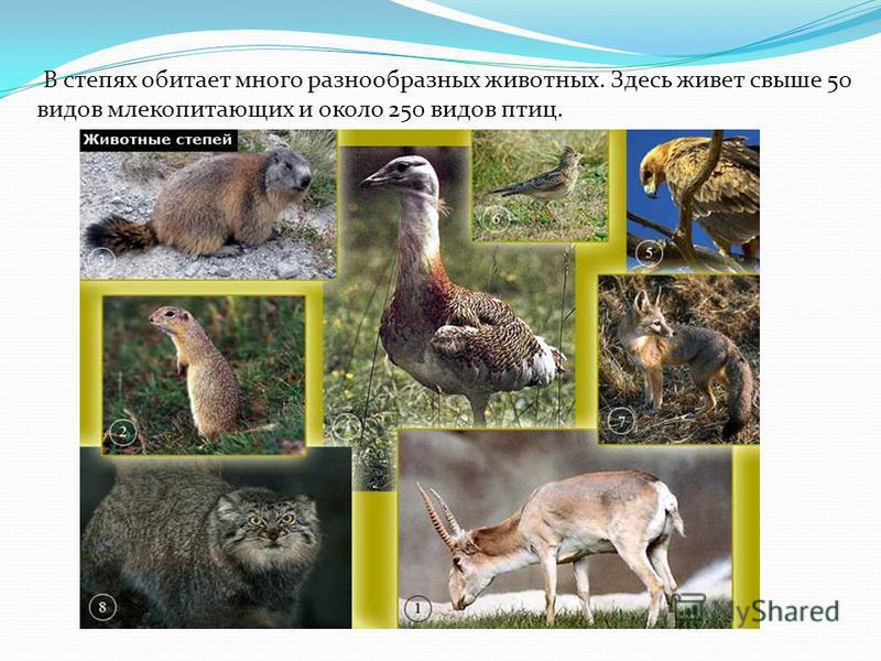 В степях обитает много разнообразных животных. Здесь живет свыше 50 видов млекопитающих и около 250 видов птиц.