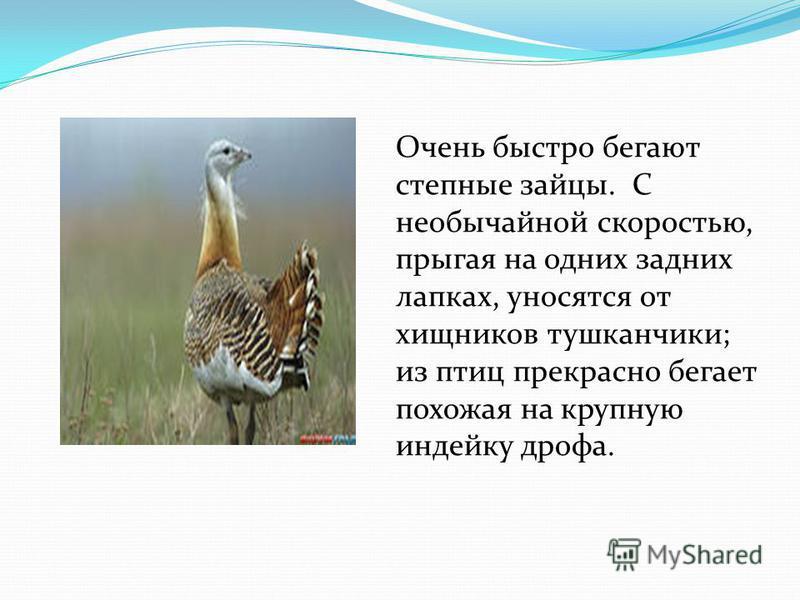 Очень быстро бегают степные зайцы. С необычайной скоростью, прыгая на одних задних лапках, уносятся от хищников тушканчики; из птиц прекрасно бегает похожая на крупную индейку дрофа.