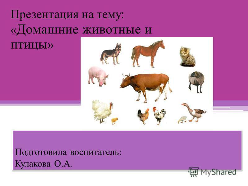 Подготовила воспитатель: Кулакова О.А. Презентация на тему: « Домашние животные и птицы »