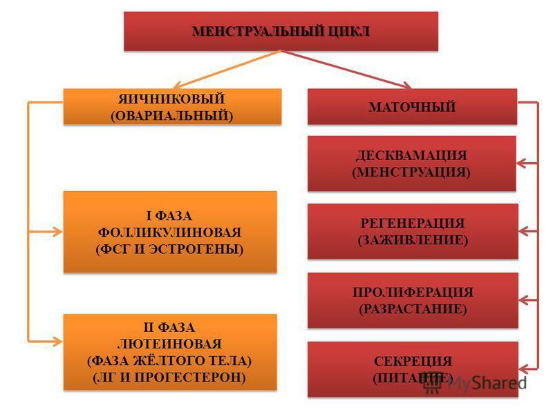 МЕНСТРУАЛЬНЫЙ ЦИКЛ I ФАЗА ФОЛЛИКУЛИНОВАЯ (ФСГ И ЭСТРОГЕНЫ) I ФАЗА ФОЛЛИКУЛИНОВАЯ (ФСГ И ЭСТРОГЕНЫ) II ФАЗА ЛЮТЕИНОВАЯ (ФАЗА ЖЁЛТОГО ТЕЛА) (ЛГ И ПРОГЕСТЕРОН) II ФАЗА ЛЮТЕИНОВАЯ (ФАЗА ЖЁЛТОГО ТЕЛА) (ЛГ И ПРОГЕСТЕРОН) ПРОЛИФЕРАЦИЯ (РАЗРАСТАНИЕ) ПРОЛИФЕР