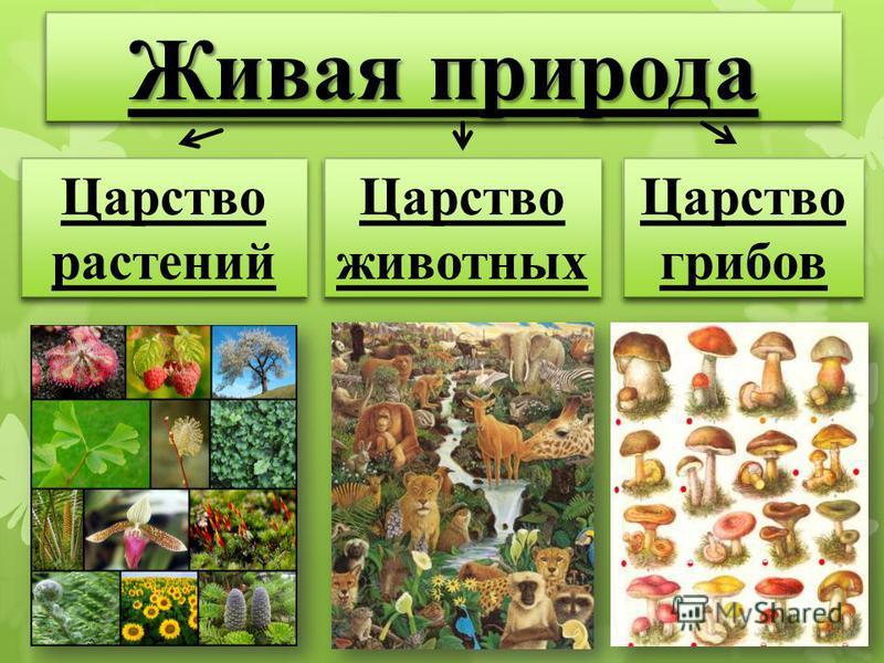 Живая природа Царство растений Царство растений Царство животных Царство животных Царство грибов Царство грибов
