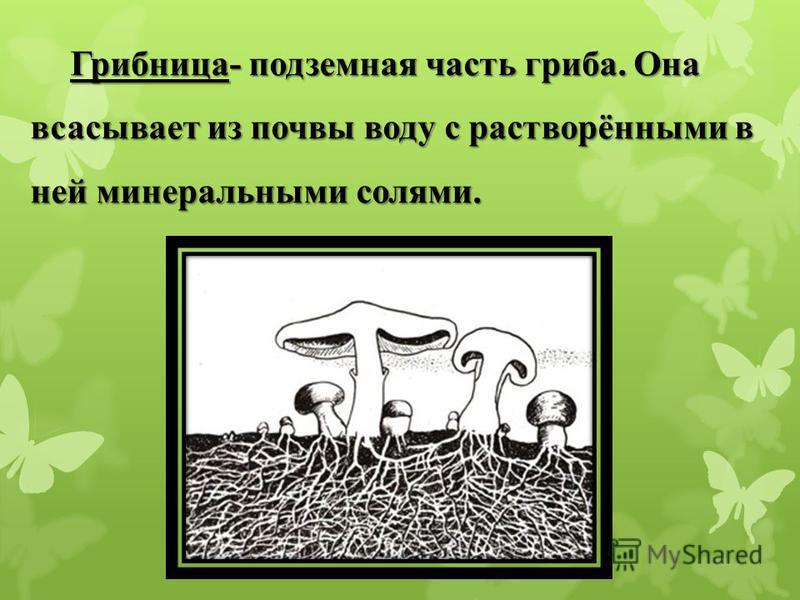 Грибница- подземная часть гриба. Она всасывает из почвы воду с растворёнными в ней минеральными солями.
