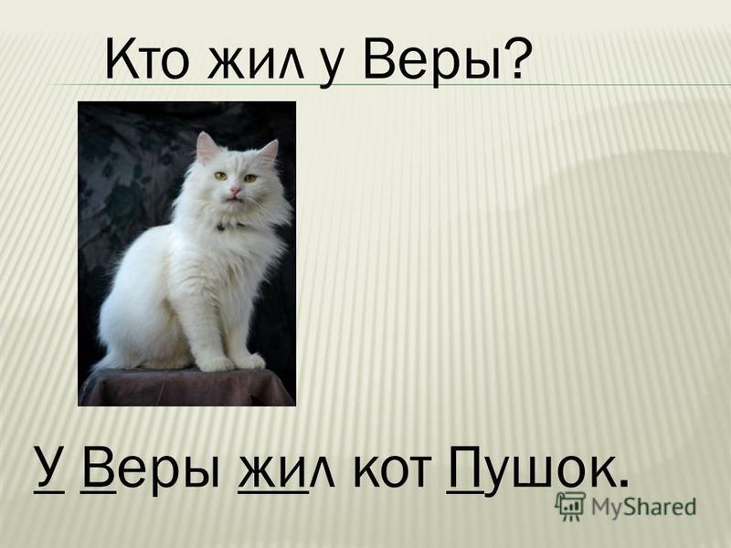 У Веры жил кот Пушок.