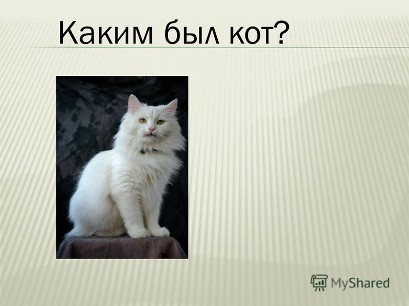 Каким был кот?