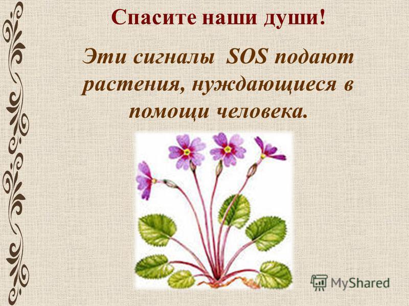 Спасите наши души! Эти сигналы SOS подают растения, нуждающиеся в помощи человека.