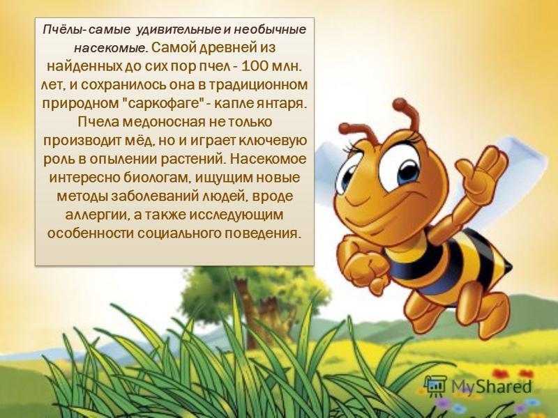 Пчёлы- самые удивительные и необычные насекомые. Самой древней из найденных до сих пор пчел - 100 млн. лет, и сохранилось она в традиционном природном