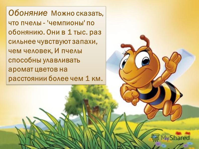 Обоняние Можно сказать, что пчелы - 'чемпионы' по обонянию. Они в 1 тыс. раз сильнее чувствуют запахи, чем человек, И пчелы способны улавливать аромат цветов на расстоянии более чем 1 км.