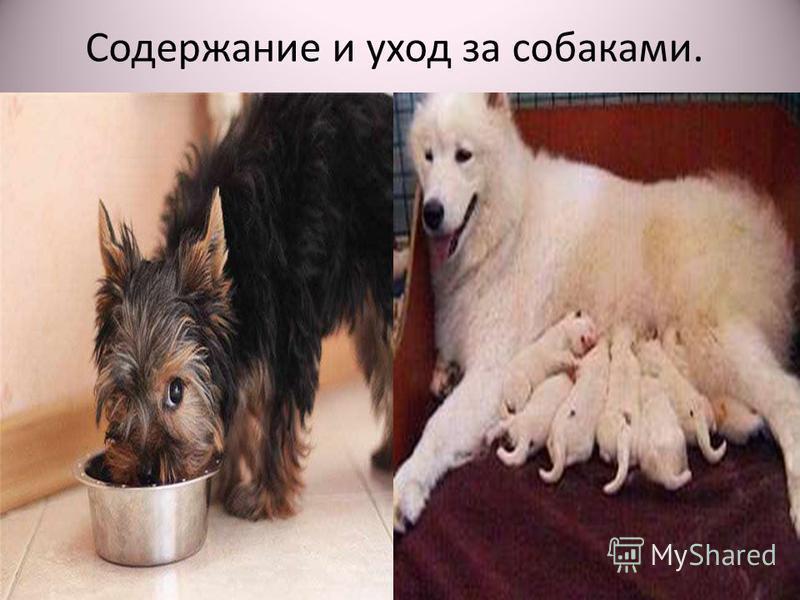 Содержание и уход за собаками.