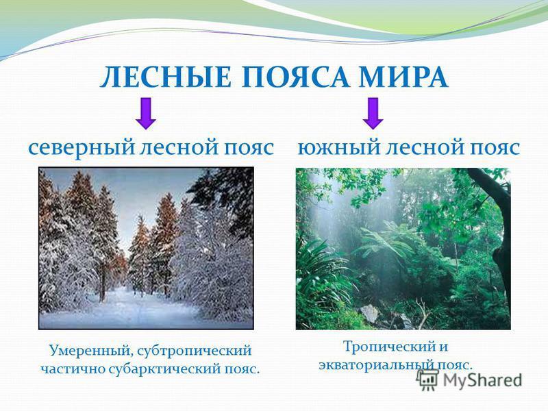 ЛЕСНЫЕ ПОЯСА МИРА северный лесной пояс южный лесной пояс Умеренный, субтропический частично субарктический пояс. Тропический и экваториальный пояс.