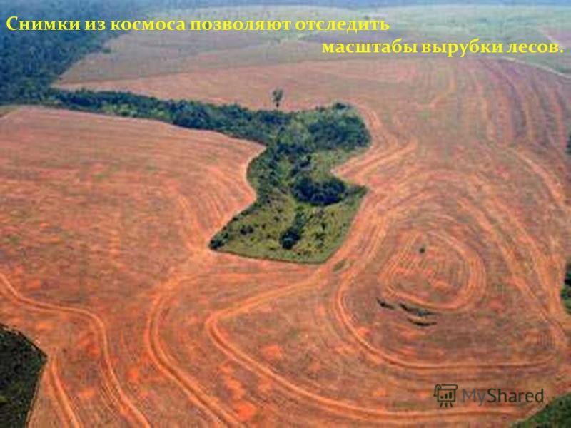 Снимки из космоса позволяют отследить масштабы вырубки лесов.