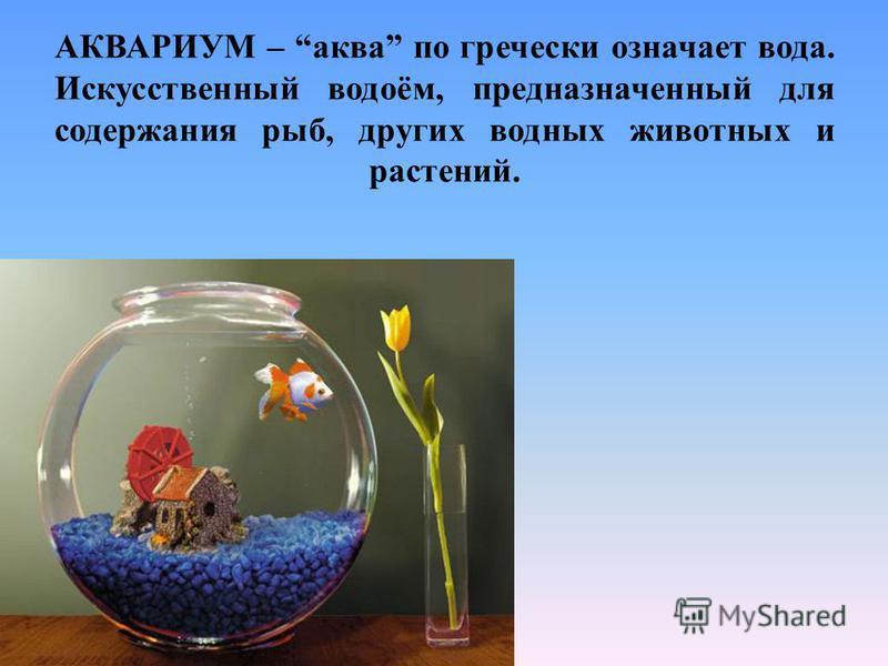 АКВАРИУМ – аква по гречески означает вода. Искусственный водоём, предназначенный для содержания рыб, других водных животных и растений.