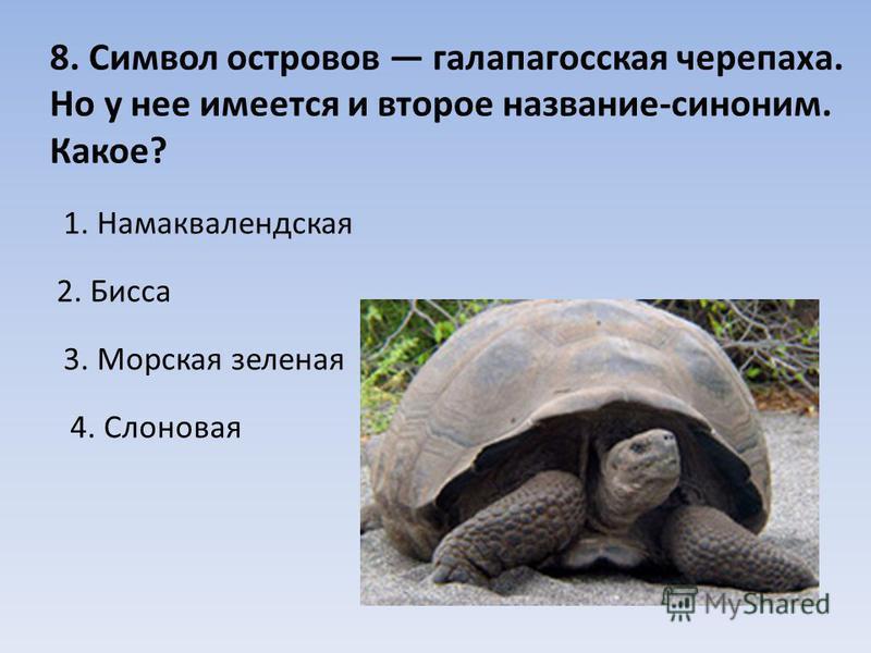 8. Символ островов галапагосская черепаха. Но у нее имеется и второе название-синоним. Какое? 1. Намаквалендская 2. Бисса 3. Морская зеленая 4. Слоновая