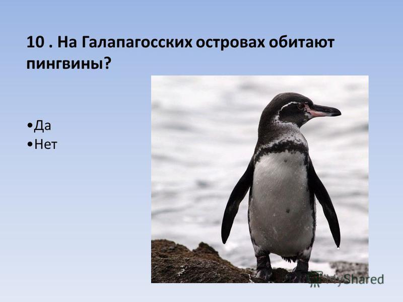 10. На Галапагосских островах обитают пингвины? Да Нет