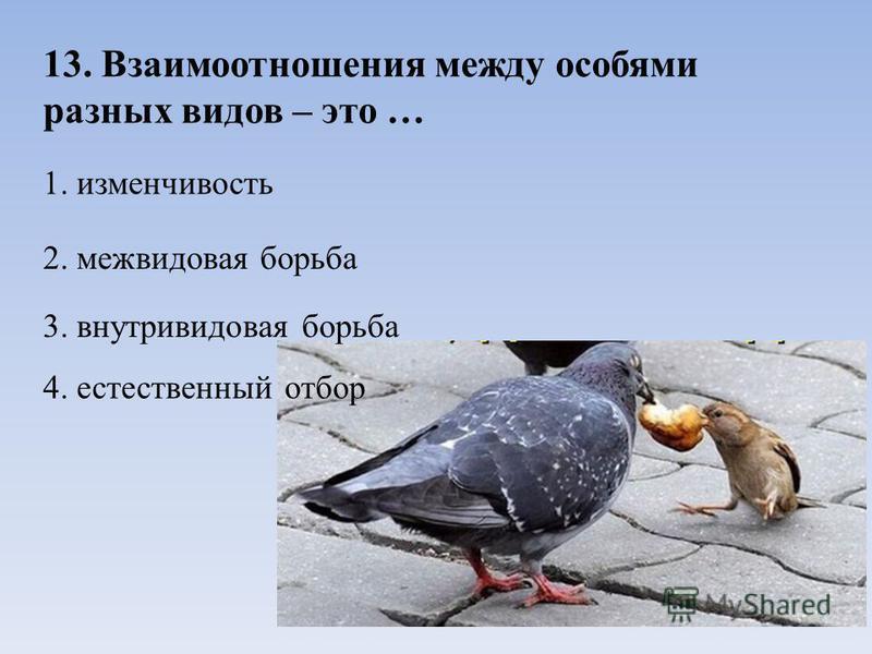 13. Взаимоотношения между особями разных видов – это … 1. изменчивость 2. межвидовая борьба 3. внутривидовая борьба 4. естественный отбор