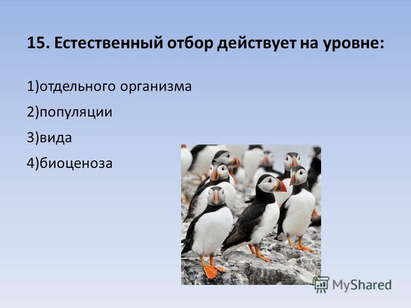 15. Естественный отбор действует на уровне: 1)отдельного организма 2)популяции 3)вида 4)биоценоза