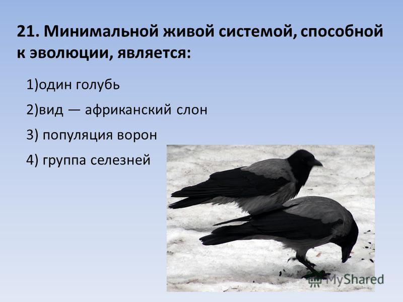 21. Минимальной живой системой, способной к эволюции, является: 1)один голубь 2)вид африканский слон 3) популяция ворон 4) группа селезней