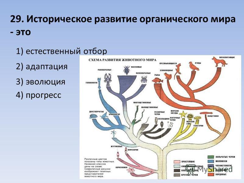 29. Историческое развитие органического мира - это 1) естественный отбор 2) адаптация 3) эволюция 4) прогресс