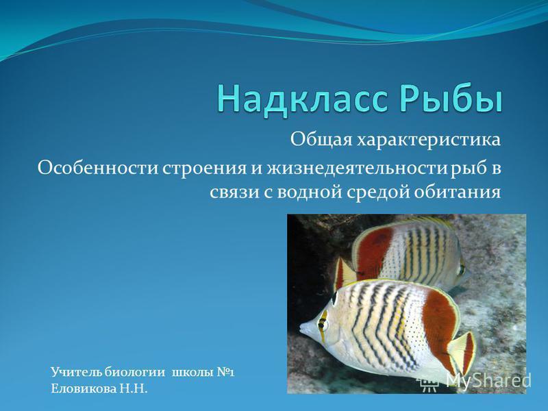 Общая характеристика Особенности строения и жизнедеятельности рыб в связи с водной средой обитания Учитель биологии школы 1 Еловикова Н.Н.