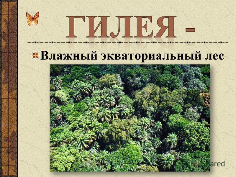 Влажный экваториальный лес Африки