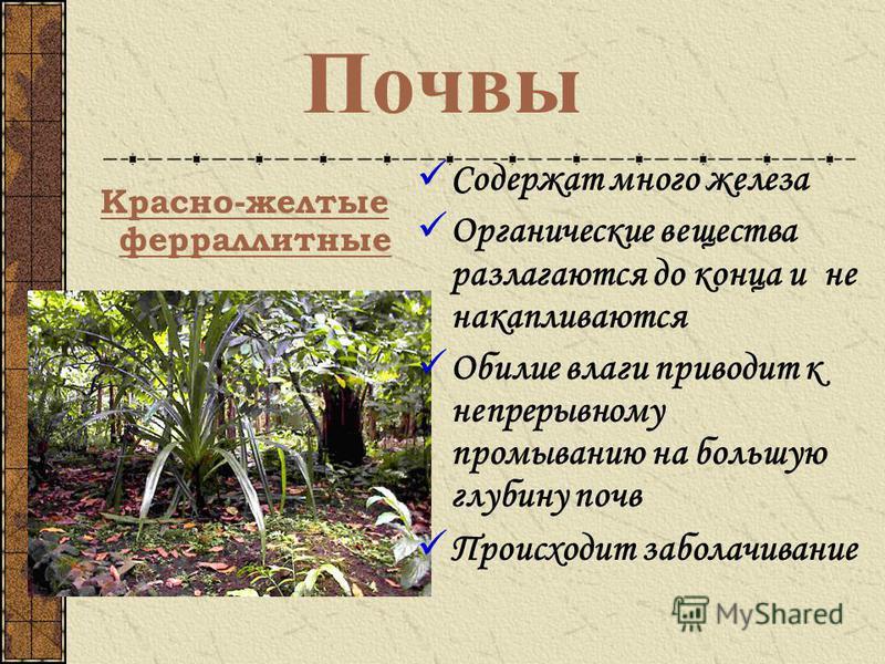 Почвы красно желтые ферраллитные
