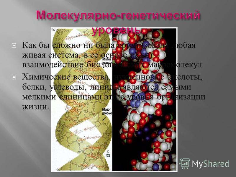 Как бы сложно ни была организована любая живая система, в ее основе лежит взаимодействие биологических макромолекул Химические вещества, нуклеиновые кислоты, белки, углеводы, липиды являются самыми мелкими единицами этого уровня организации жизни.