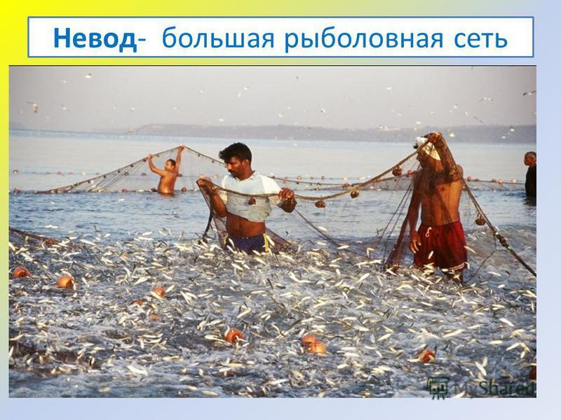 Невод- большая рыболовная сеть