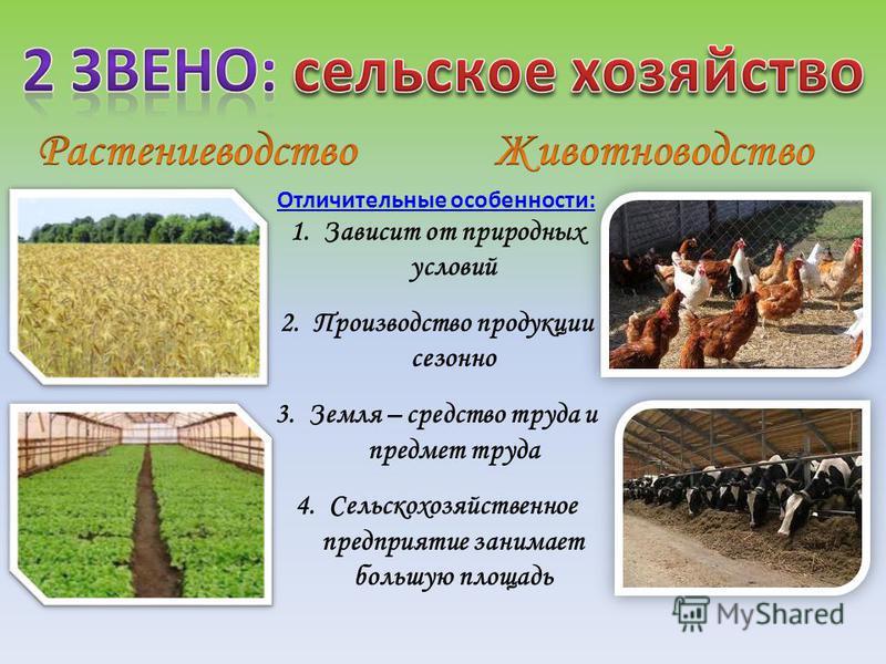 Отличительные особенности: 1. Зависит от природных условий 2. Производство продукции сезонно 3. Земля – средство труда и предмет труда 4. Сельскохозяйственное предприятие занимает большую площадь